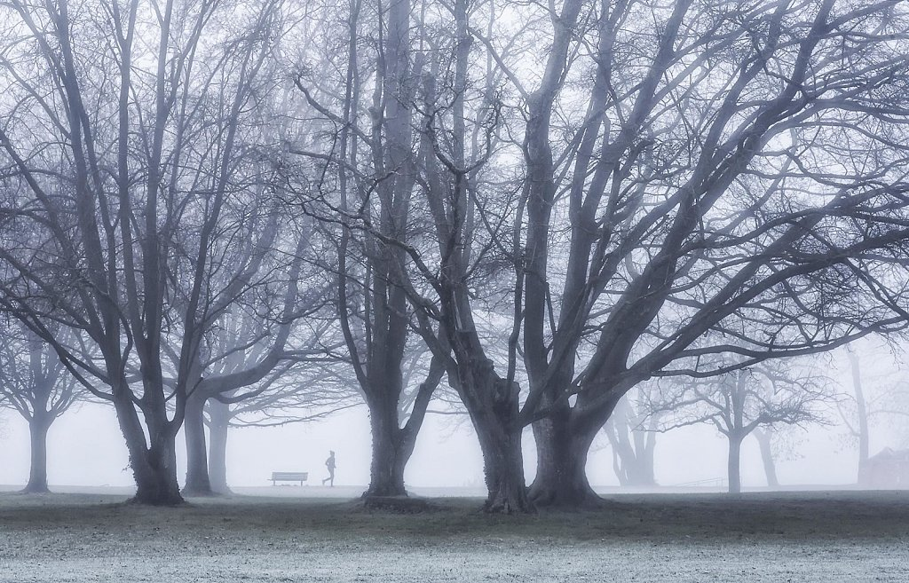 betwenen trees